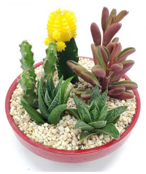 cactus succulent set